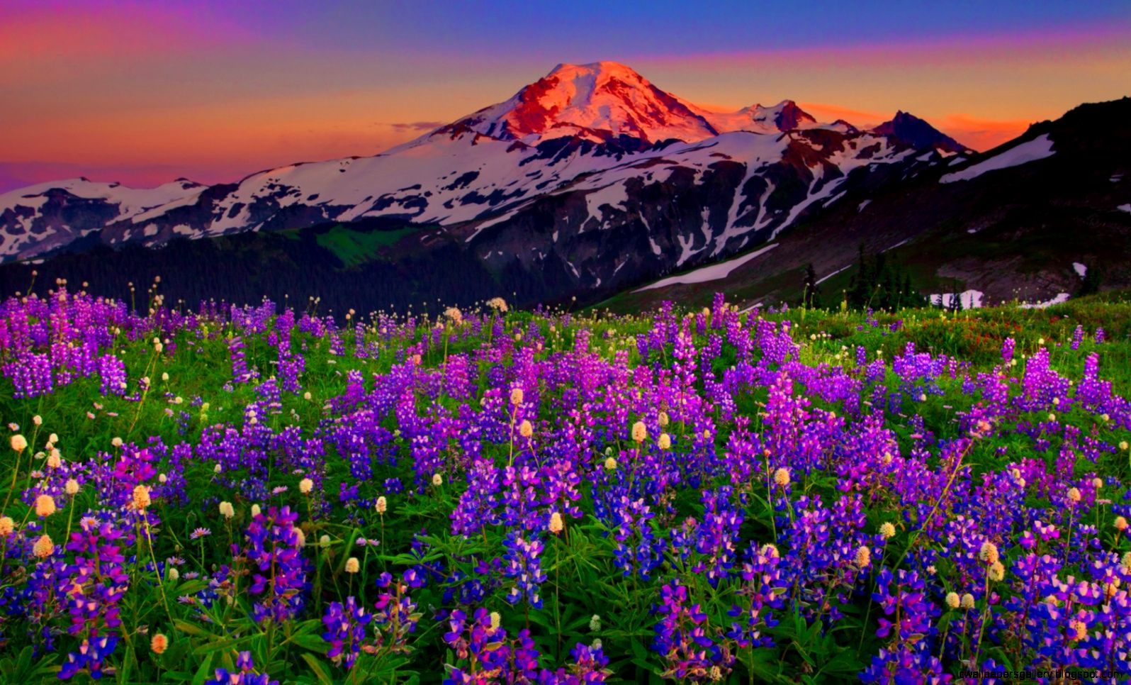 Summer Wildflowers Wallpaper Summer Wildflowers Wallpaper