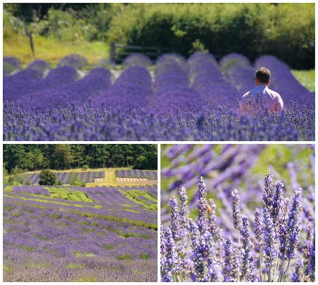 visit Pelindaba Lavender Farm Washington State