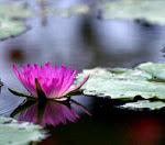 Espiritualidade nos faz consciente da Vida, agora e no futuro.