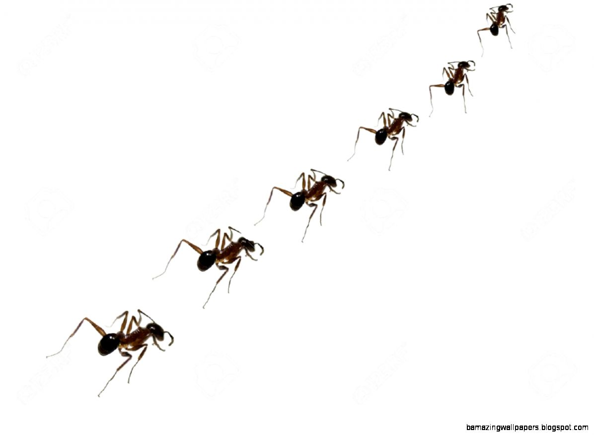 A Metaphorical Image Of A Team Of Ants Walking In A Line To Their