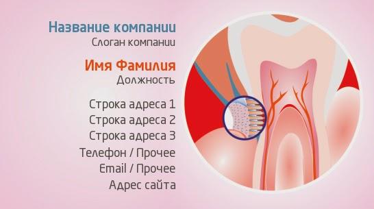 http://www.poleznosti-vsyakie.ru/2014/05/vizitka-koren-zuba-v-razreze-i-pod-mikroskopom.html