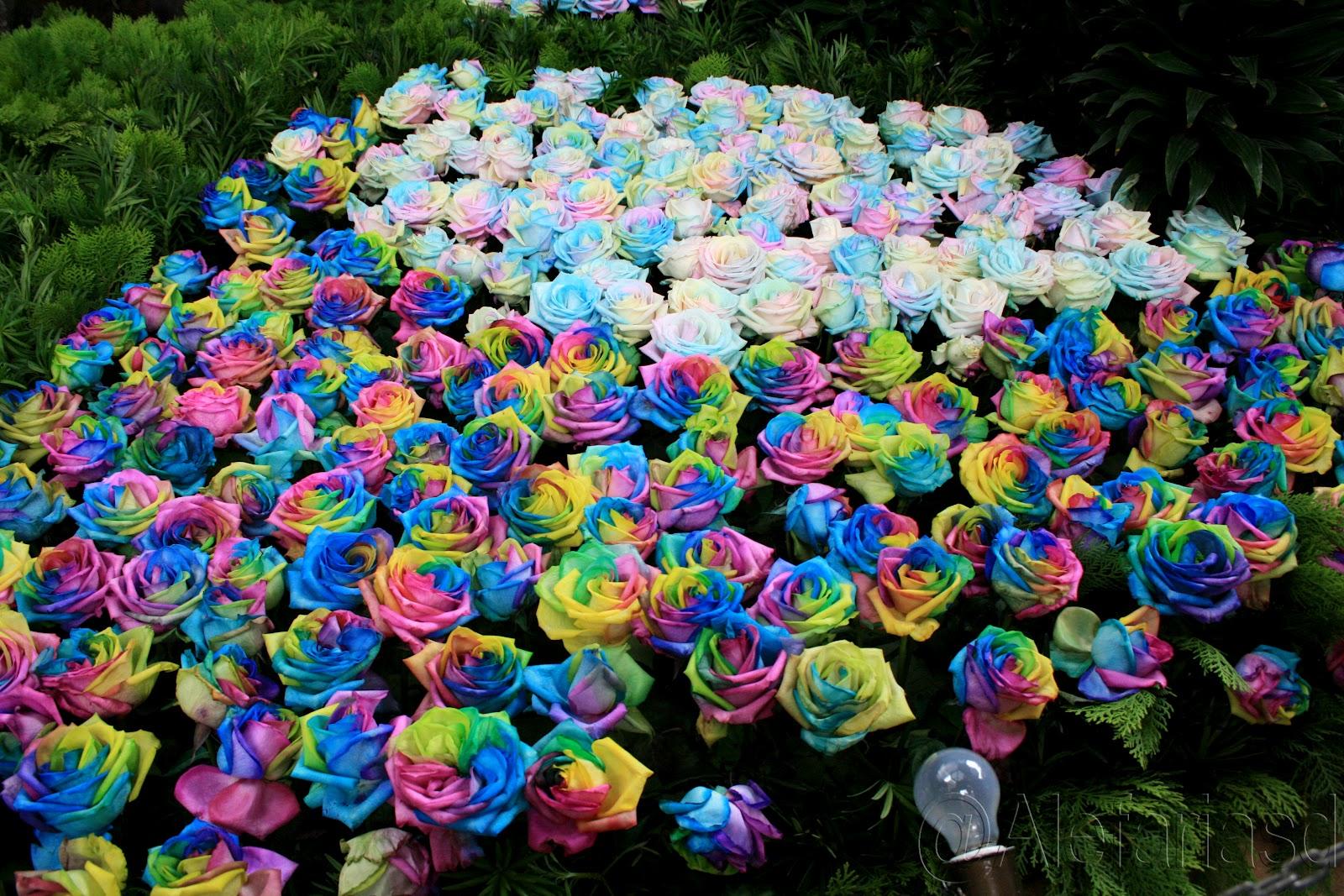 Mi chile lindo feria de flores regalo para la vista for Cuarto lleno de rosas