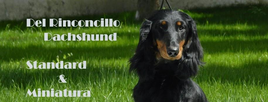 Del Rinconcillo Teckels