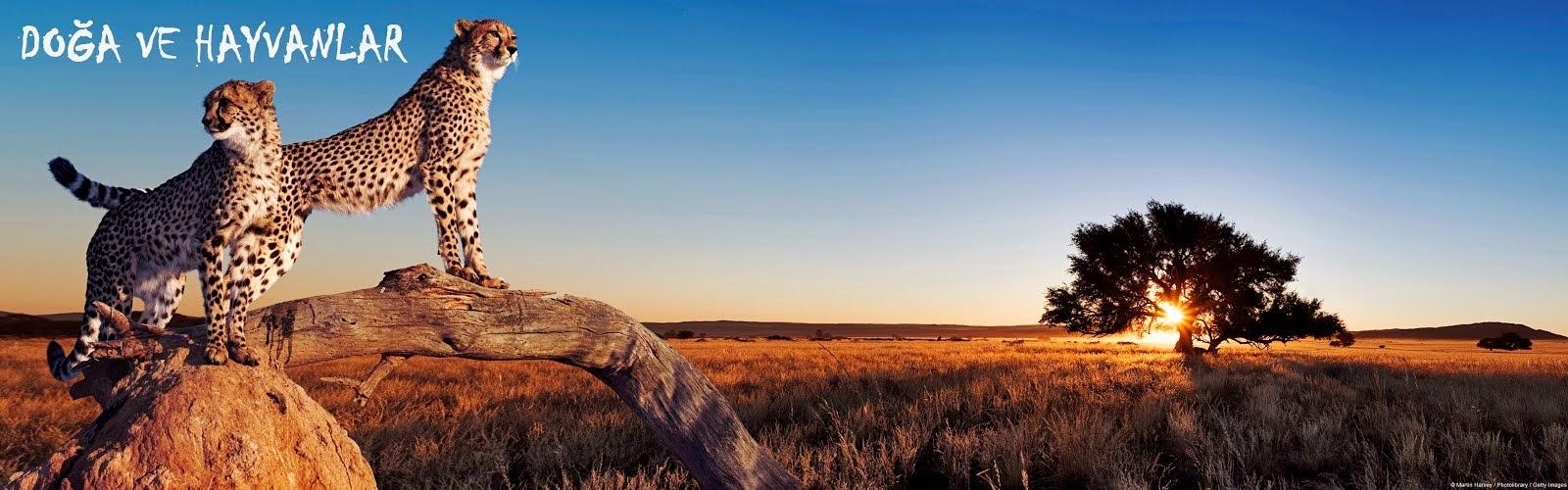 Doğa Ve Hayvanlar Kanguru Doğum Ani