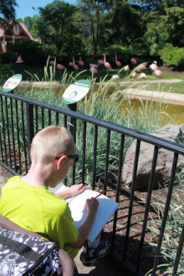 Sketch flamingos at the zoo for FLORA AND THE FLAMINGO by Molly Idle