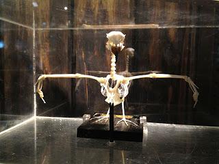 Bird Skeleton Exhibit- Sketchbook - Grant Museum of Zoology Field Trip London - Arts Award Bronze Level Art Portfolio Ideas