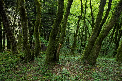 Mossy forest in Massif des Bauges Natural Park