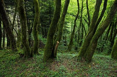 Mossy forest in Massif des Bauges Natural Park