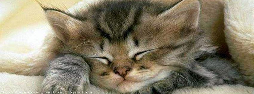Couverture facebook incroyable chaton dort