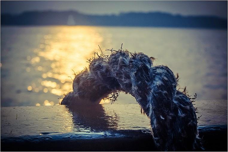 emerging photographers, Best Photo of the Day in Emphoka by Rasmus Sonderborg, https://flic.kr/p/pj395U