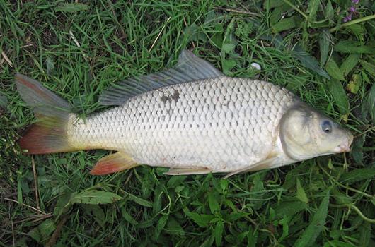 озеро муромское рыбалка