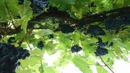 Hier geht es zu den gute gelaunten Weinfreunden.