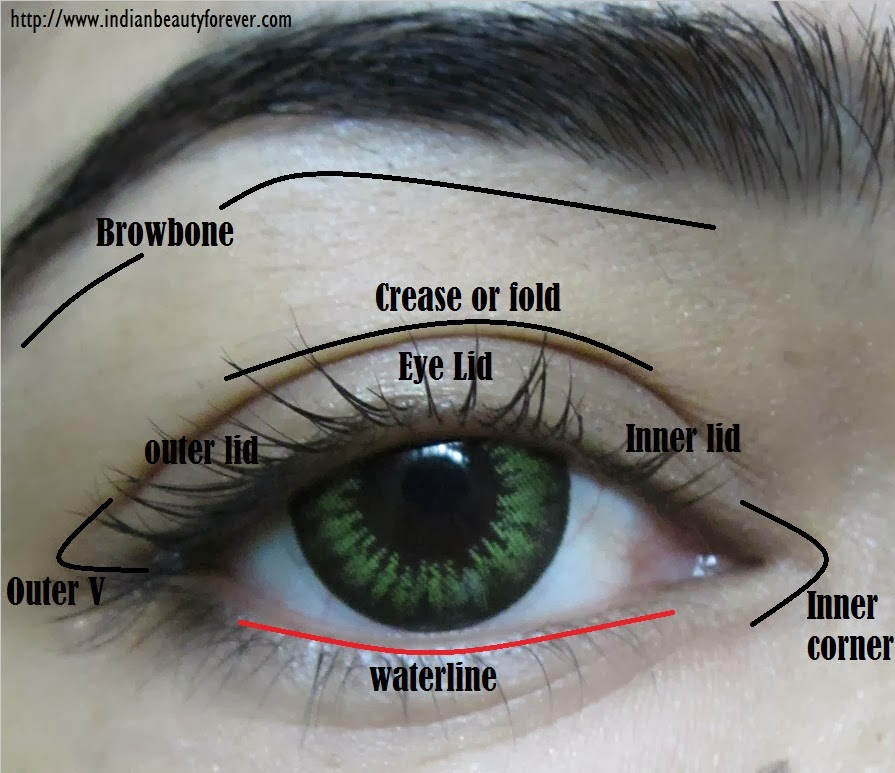 Diagram of the eyelid makeup tools i m glad i exist an amateur s dictionary of makeup terminology rh imgladiexist blogspot com makeup face diagram smokey eye diagram ccuart