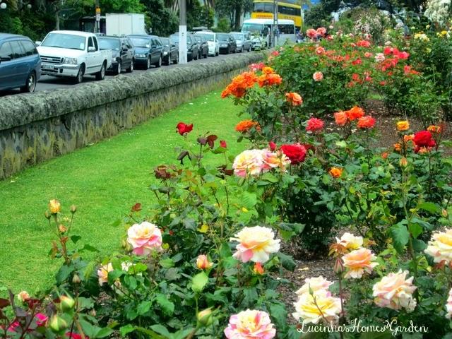 Jardim da Lucinha Parnell Rose Garden II  Jardim de Rosas