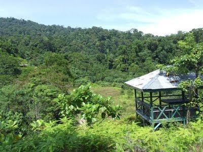lokasi Taman Nasional Bukit Tigapuluh TNBT 30 Indonesia