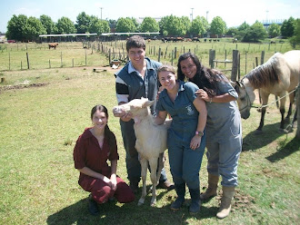 Ser Veterinário não é só cuidar de animais.