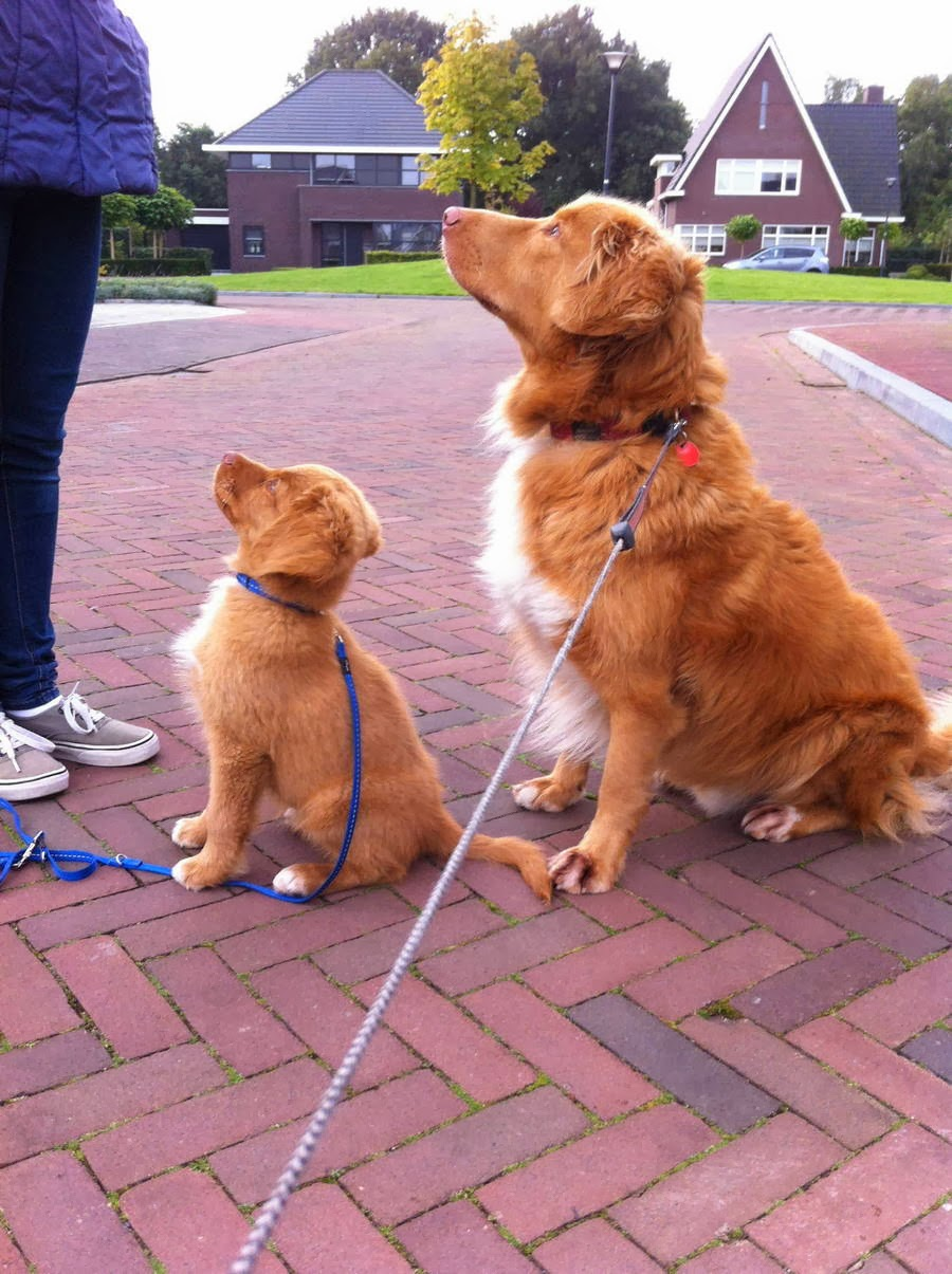 Cute dogs - part 11 (50 pics), dog and her puppy