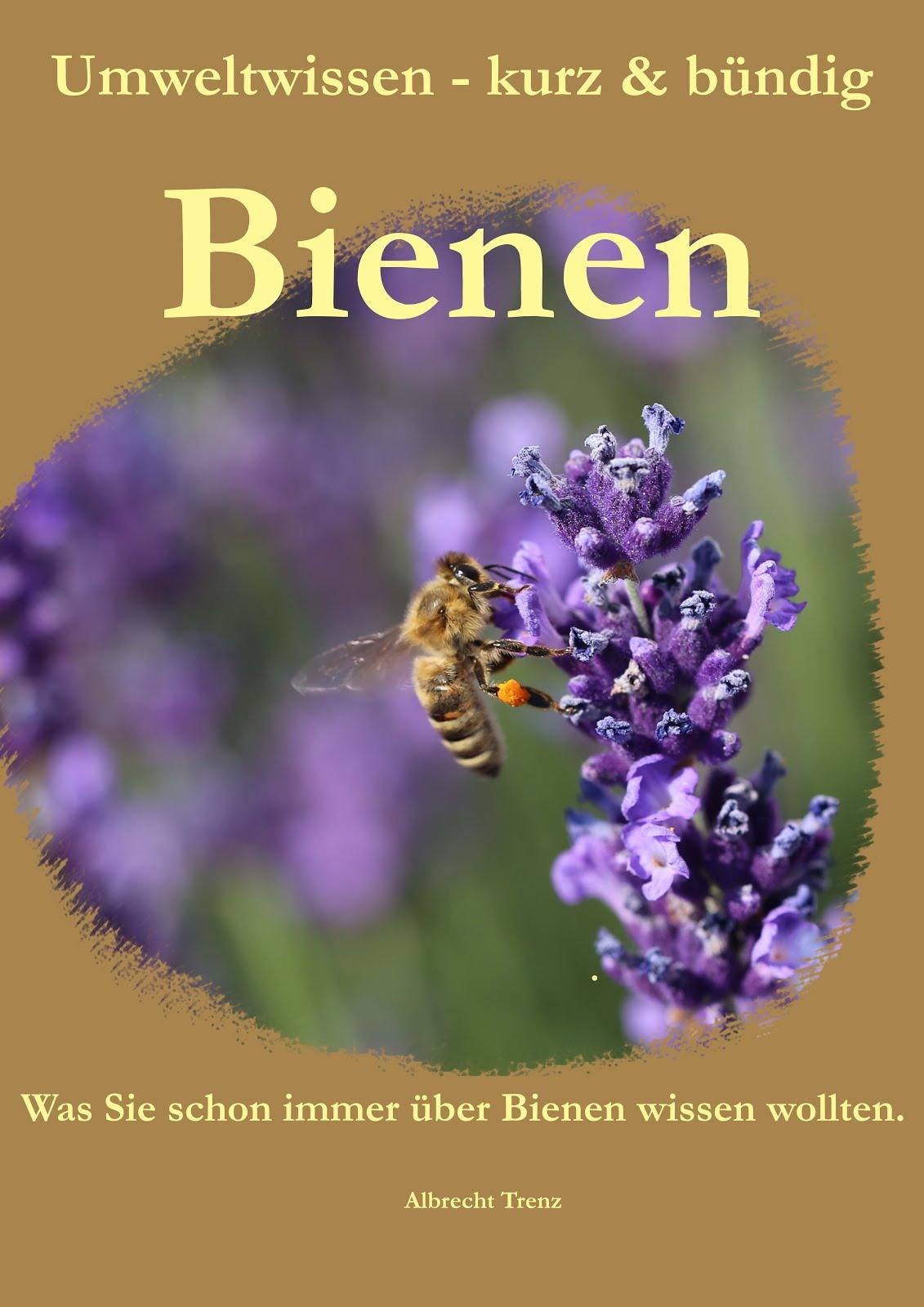 Alles Wichtige über Bienen