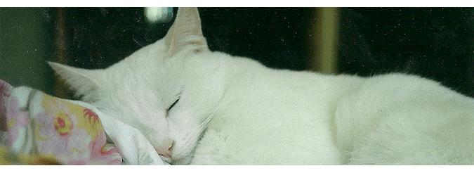 como+dormir+sem+sono