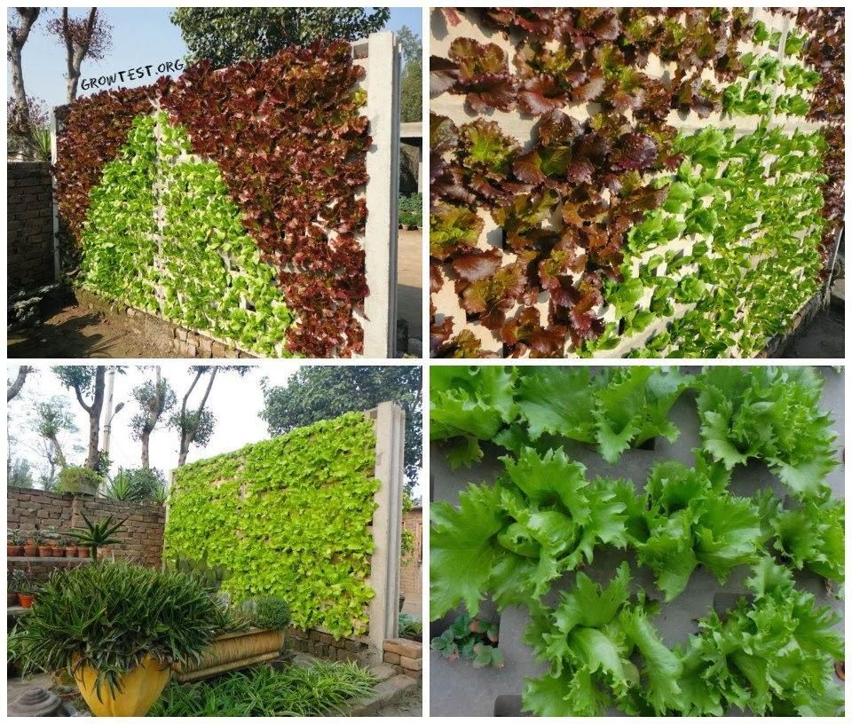 Membuat Vertical Garden, Solusi Asri Untuk Rumah Minimalis