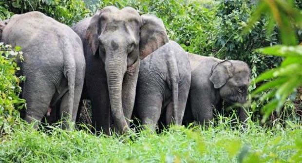 Elefanten Khao Chamao Thailand
