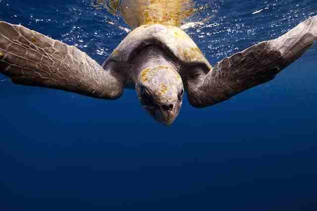 A beleza da vida marinha nas fotos de Jorge Cervera Hauser