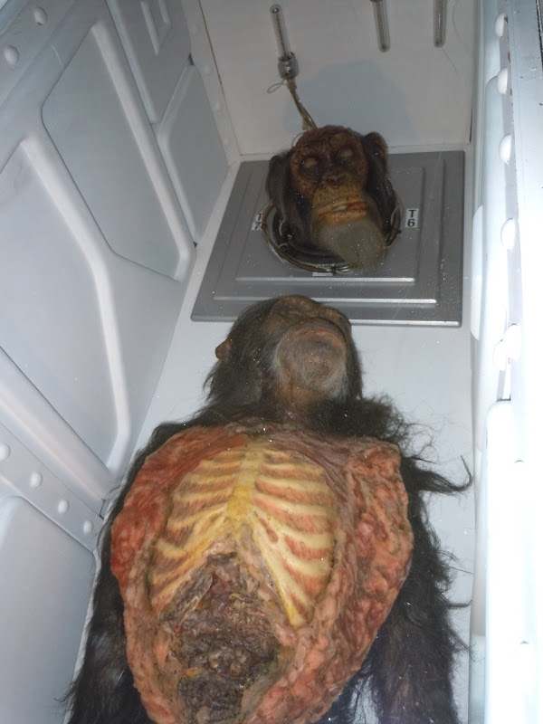 Chimp horror props 28 Days Later