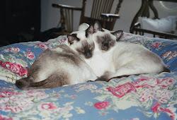 Leela and Luna