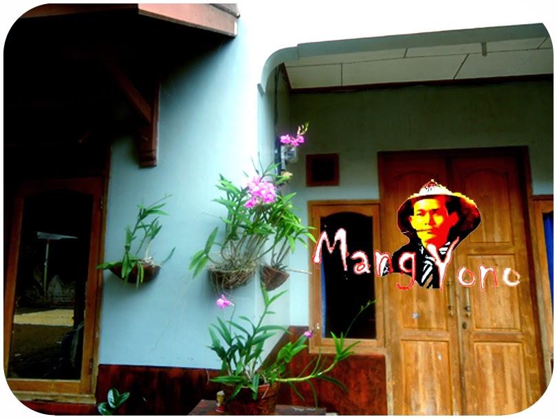Anggrek berbunga dengan media Arang kayu dengan Pot ditempel pada dinding - dinding Rumah saya