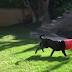 El perro y su balde