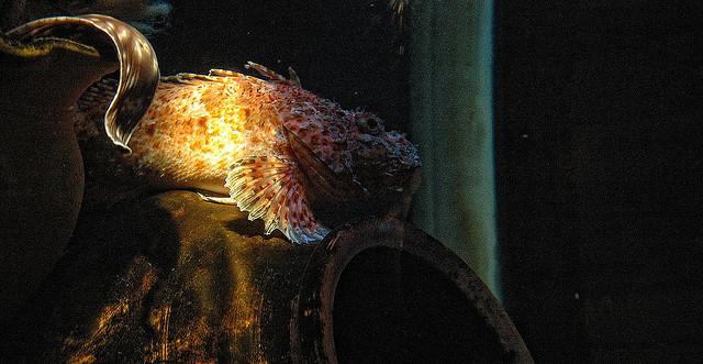 sinh vật biển quý hiếm