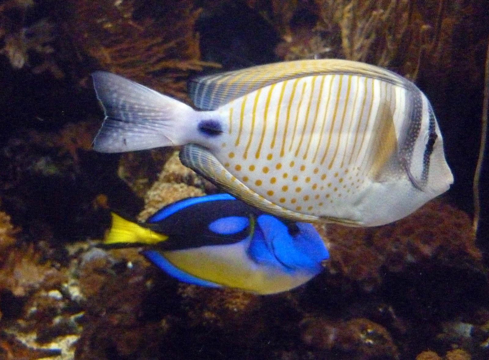 Erin Louise Buckley: London Sea Life Centre