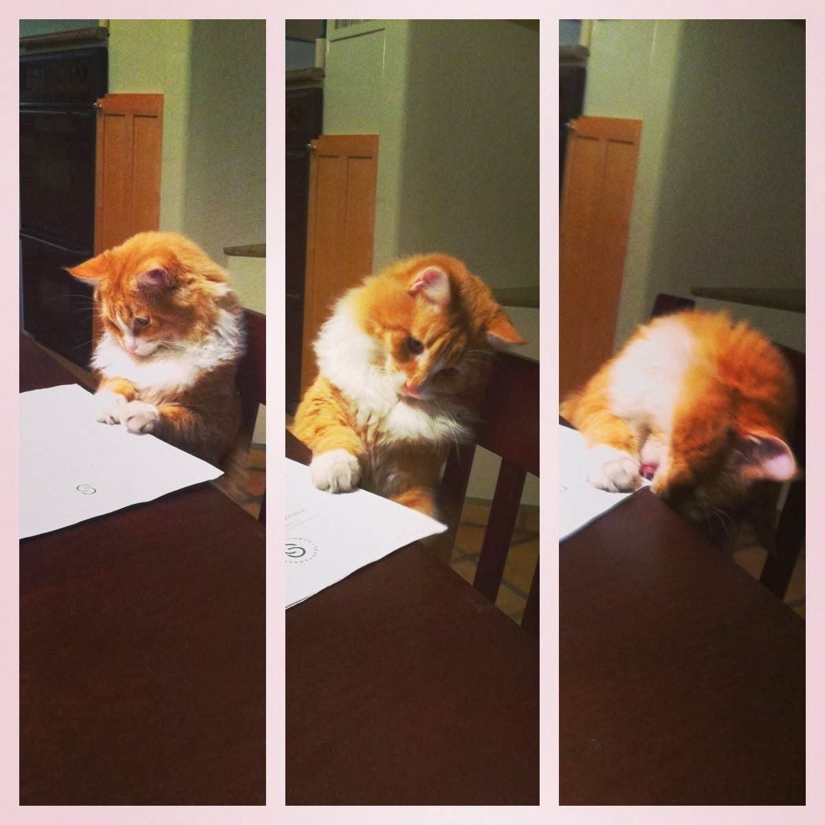 Funny cats - part 87 (40 pics + 10 gifs), cat investigates a paper then licks it