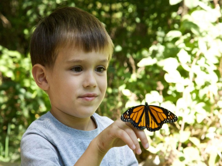 orange monarch butterfly on boy's hand
