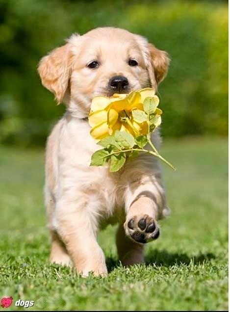 See more Cute dogs http://cutepuppyanddog.blogspot.com/