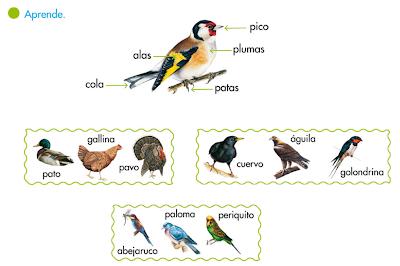 http://primerodecarlos.com/SEGUNDO_PRIMARIA/tengo_todo_4/root_globalizado4/libro/6169/ISBN_9788467808803/activity/U04_140_01_AIn/visor.swf