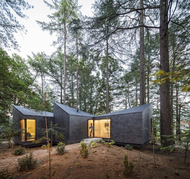 Picture of small modern house in the forest