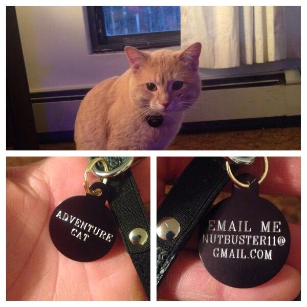 Funny cats - part 99 (40 pics + 10 gifs), cat pictures, cat with name tag Adventure Cat