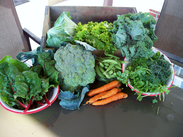 Farm fresh vegetables