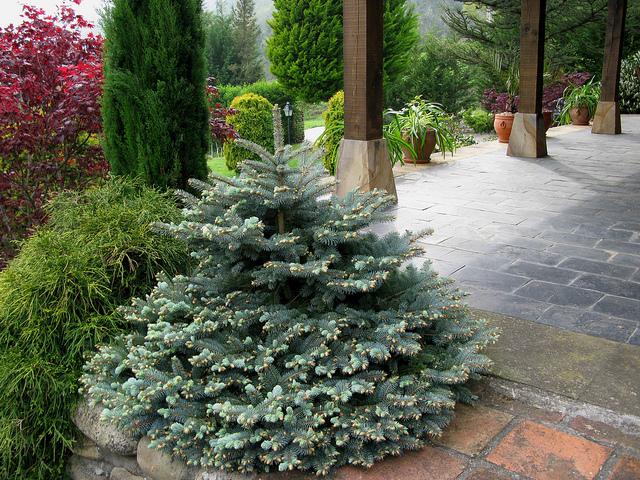 Arte y jardiner a poda de con feras for Arboles y plantas de jardin