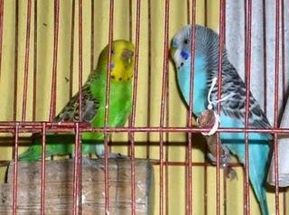 Maltrato a las Aves