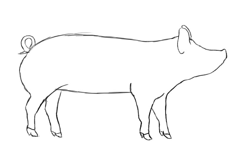 Piglet Line Drawing : Show pig outline