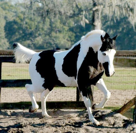Mejores razas de caballos del mundo [Top 10]