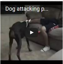 Dog attacking private part