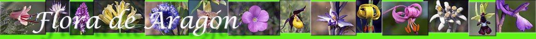 flora-aragon-eventos