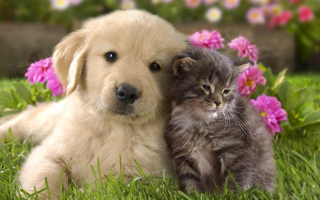 Photo of a cute cat and dog cuddling