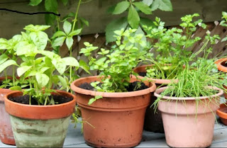 Easy Gardening Tips for Growing a Simple Garden Easy Gardening Tips for Growing a Simple Garden Simple Backyard ...