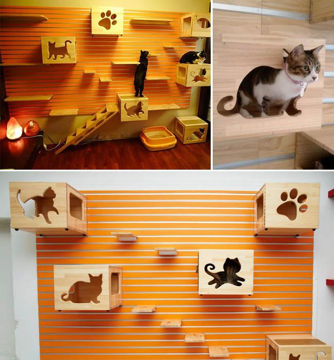 Dicas para gateiros casa adaptada para gatos - Casa para gato ...
