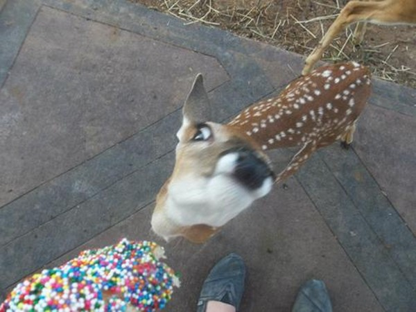 funny animal pictures, shocking deer