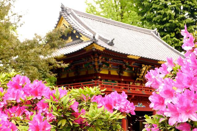 根津神社つつじ祭り, Nezu Shrine Azalea Festival